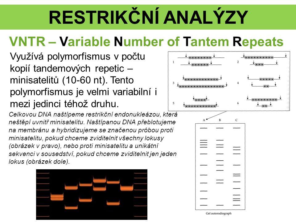 RESTRIKČNÍ ANALÝZY VNTR – Variable Number of Tantem Repeats