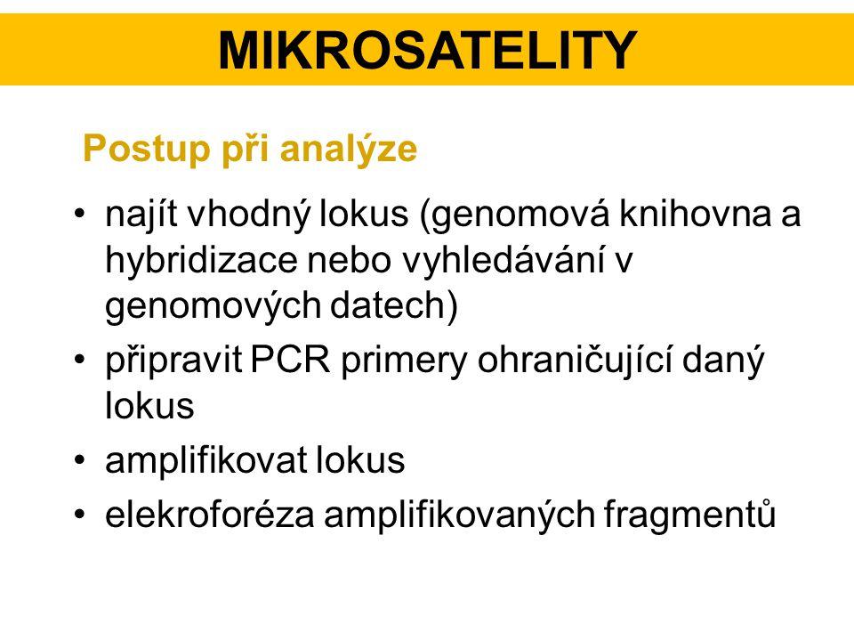 Mikrosatelity Postup při analýze