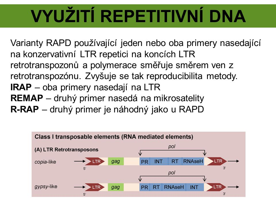 VYUžití repetitivní DNA