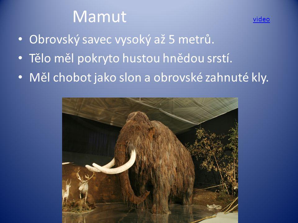 Mamut Obrovský savec vysoký až 5 metrů.