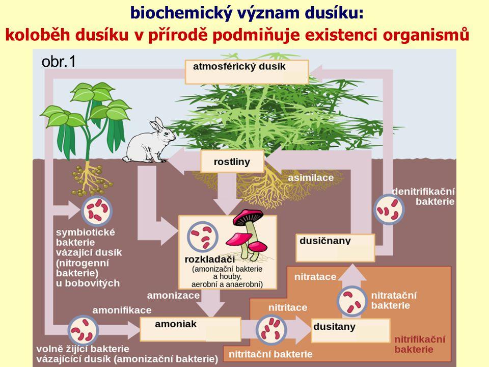 biochemický význam dusíku: