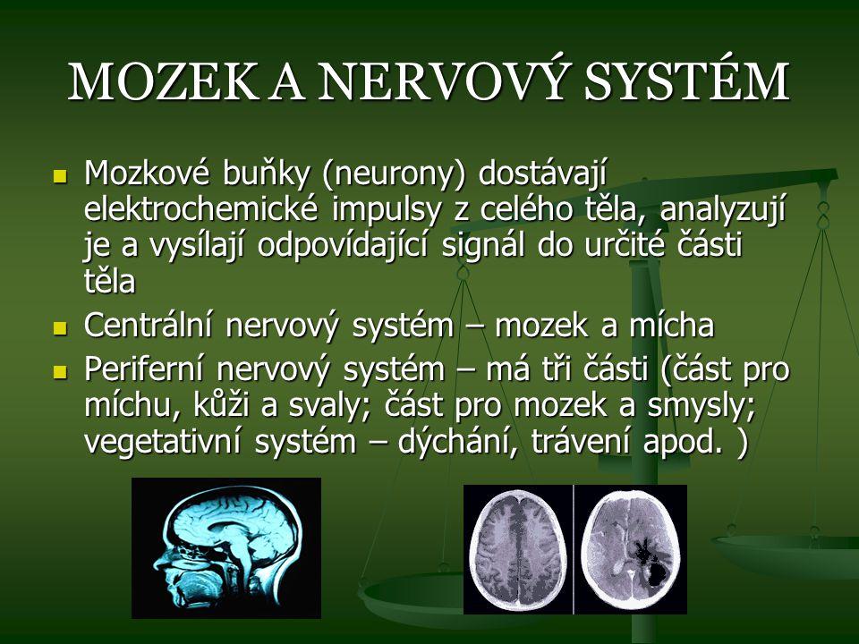 MOZEK A NERVOVÝ SYSTÉM