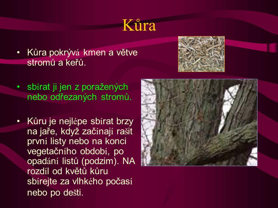 Kůra Kůra pokrývá kmen a větve stromů a keřů.