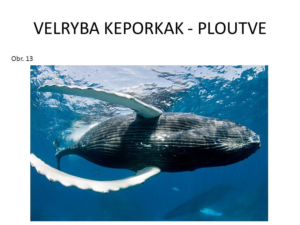 VELRYBA KEPORKAK - PLOUTVE