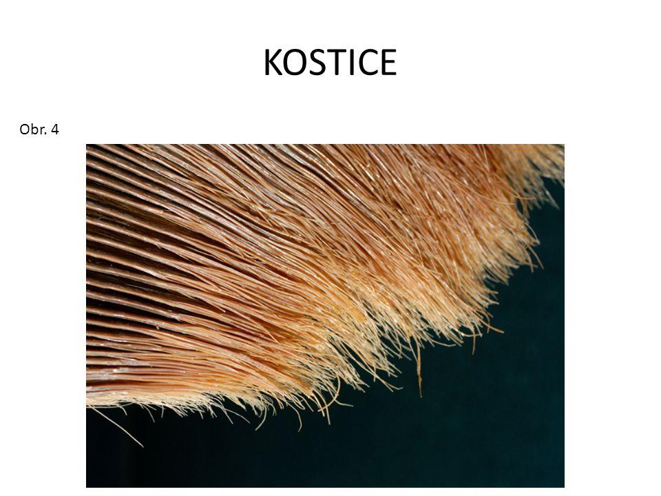 KOSTICE Obr. 4