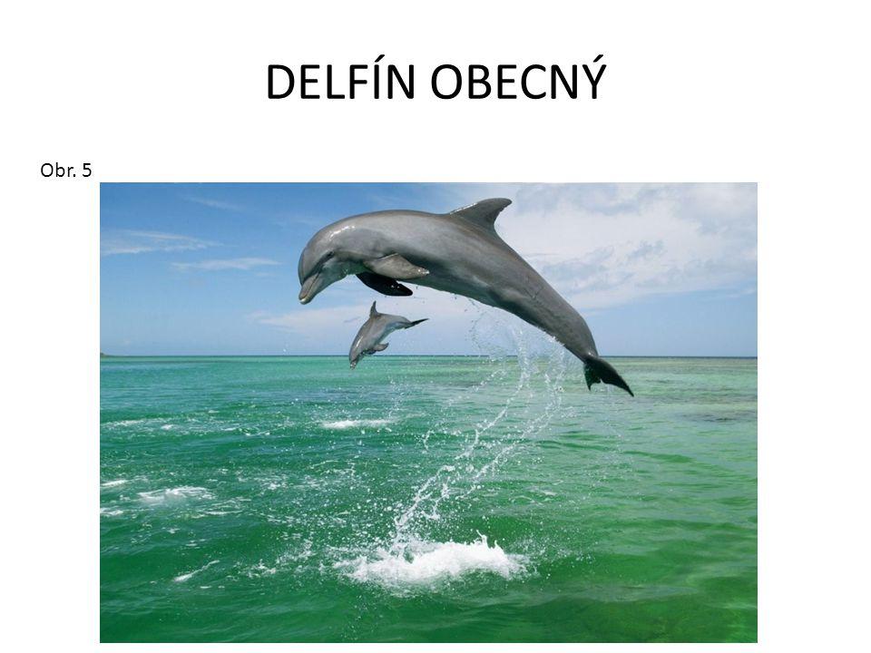 DELFÍN OBECNÝ Obr. 5