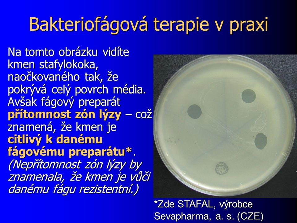 Bakteriofágová terapie v praxi