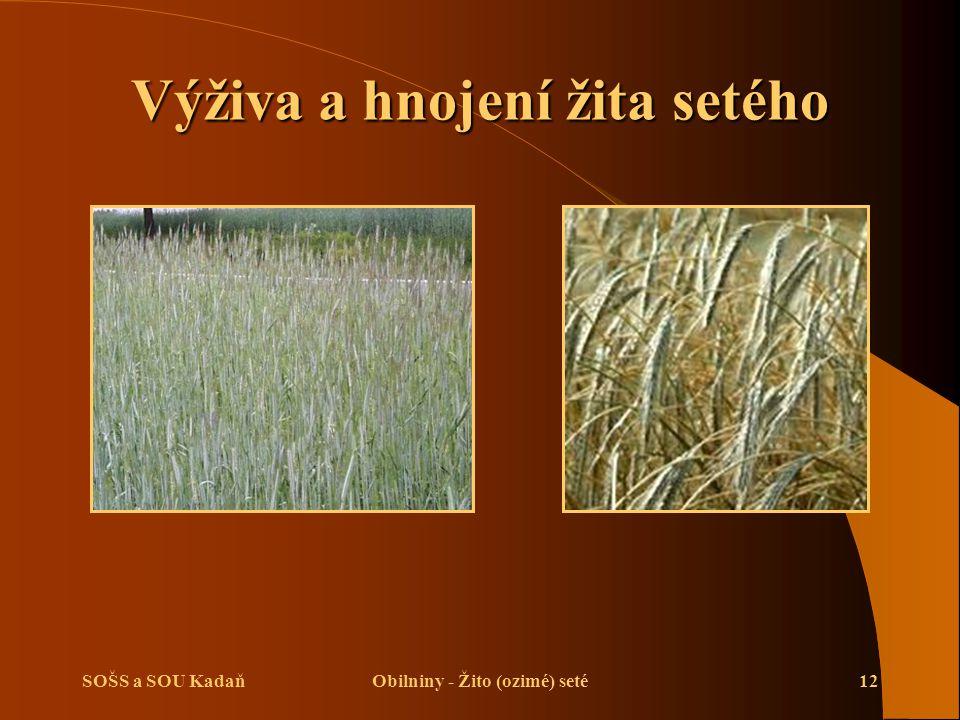 Výživa a hnojení žita setého