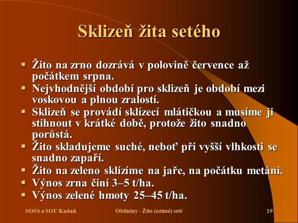 Obilniny - Žito (ozimé) seté