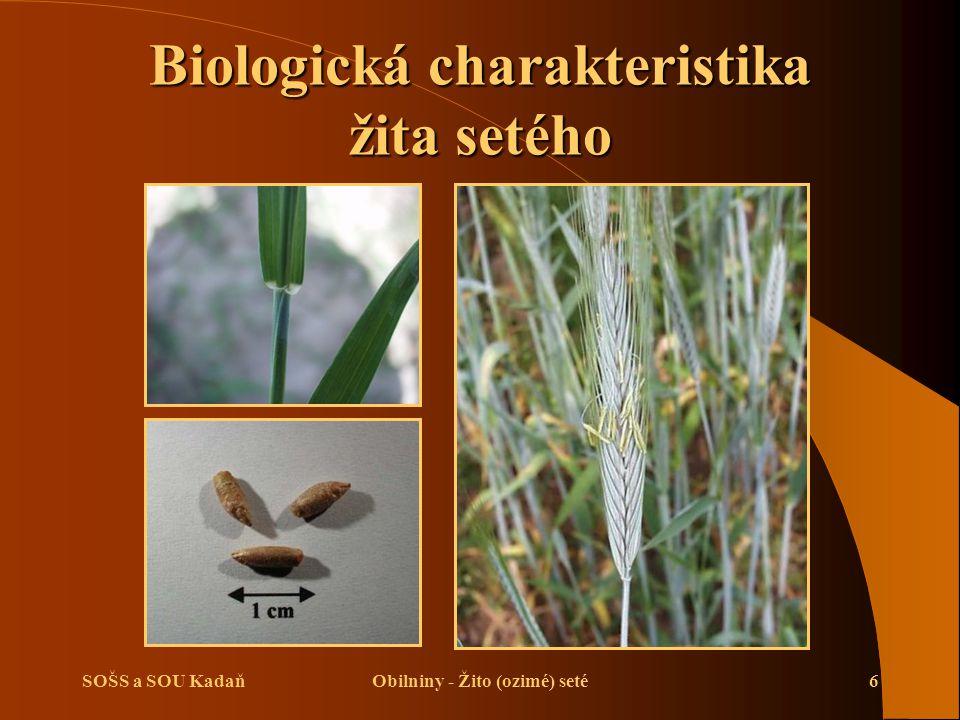 Biologická charakteristika žita setého