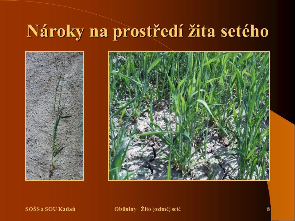 Nároky na prostředí žita setého