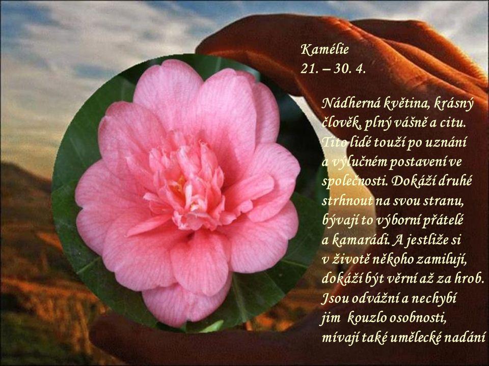Kamélie 21. – 30. 4. Nádherná květina, krásný člověk, plný vášně a citu. Tito lidé touží po uznání.