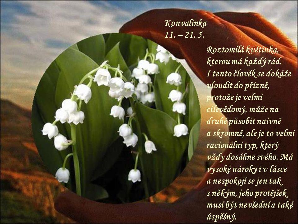 Konvalinka 11. – 21. 5. Roztomilá květinka, kterou má každý rád.
