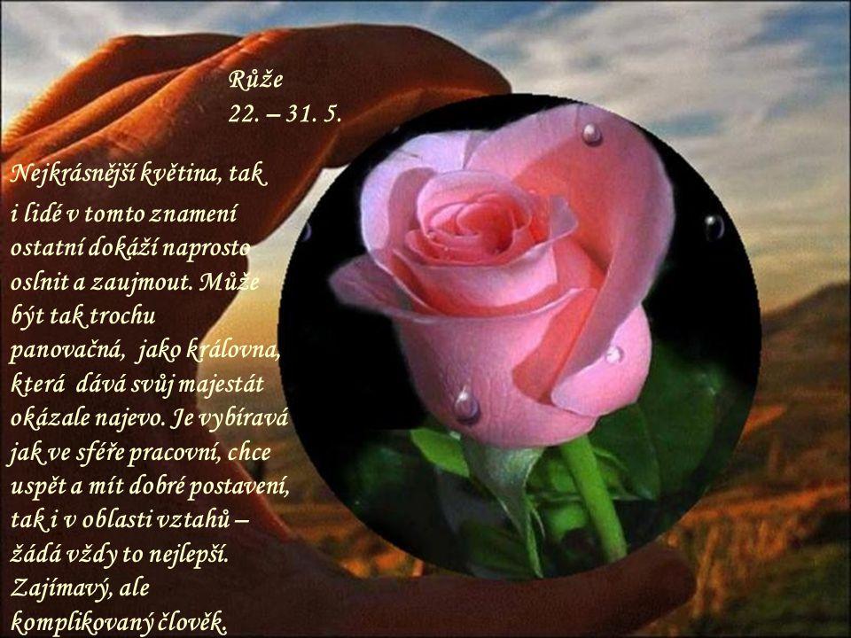 Růže 22. – 31. 5. Nejkrásnější květina, tak.