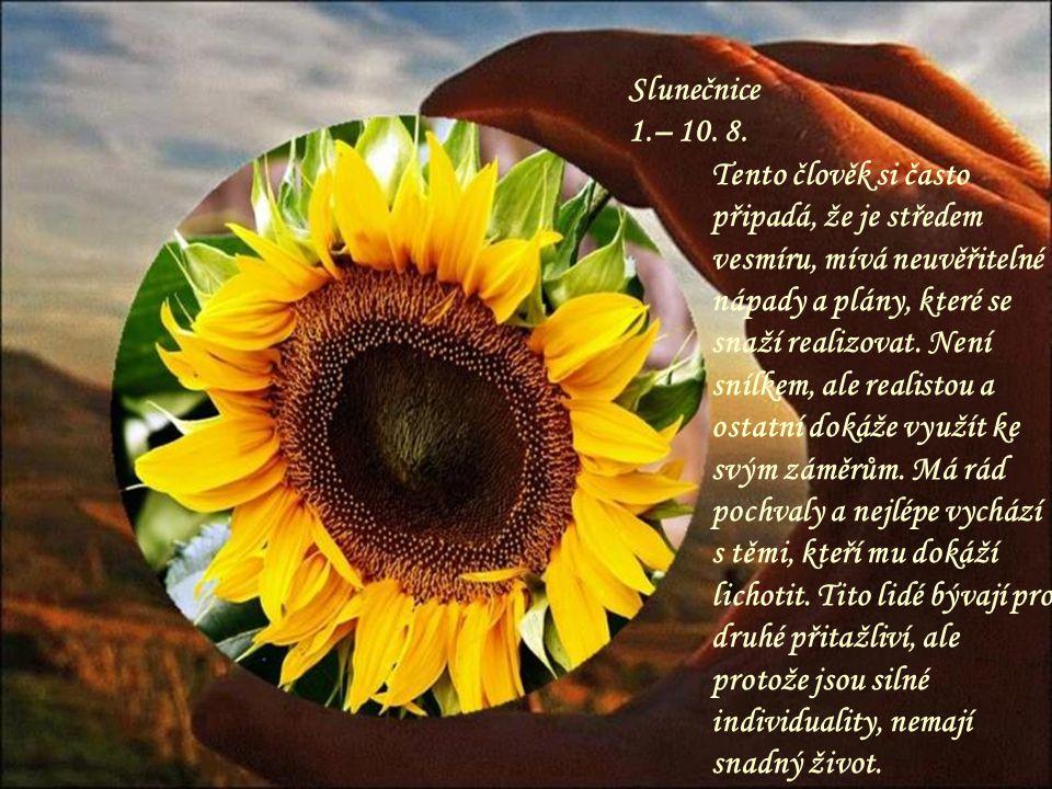 Slunečnice 1.– 10. 8.