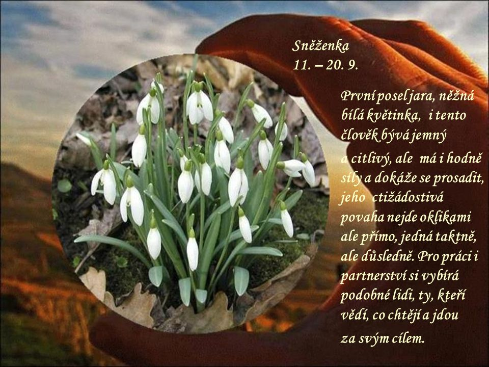 Sněženka 11. – 20. 9. První posel jara, něžná bílá květinka, i tento člověk bývá jemný.