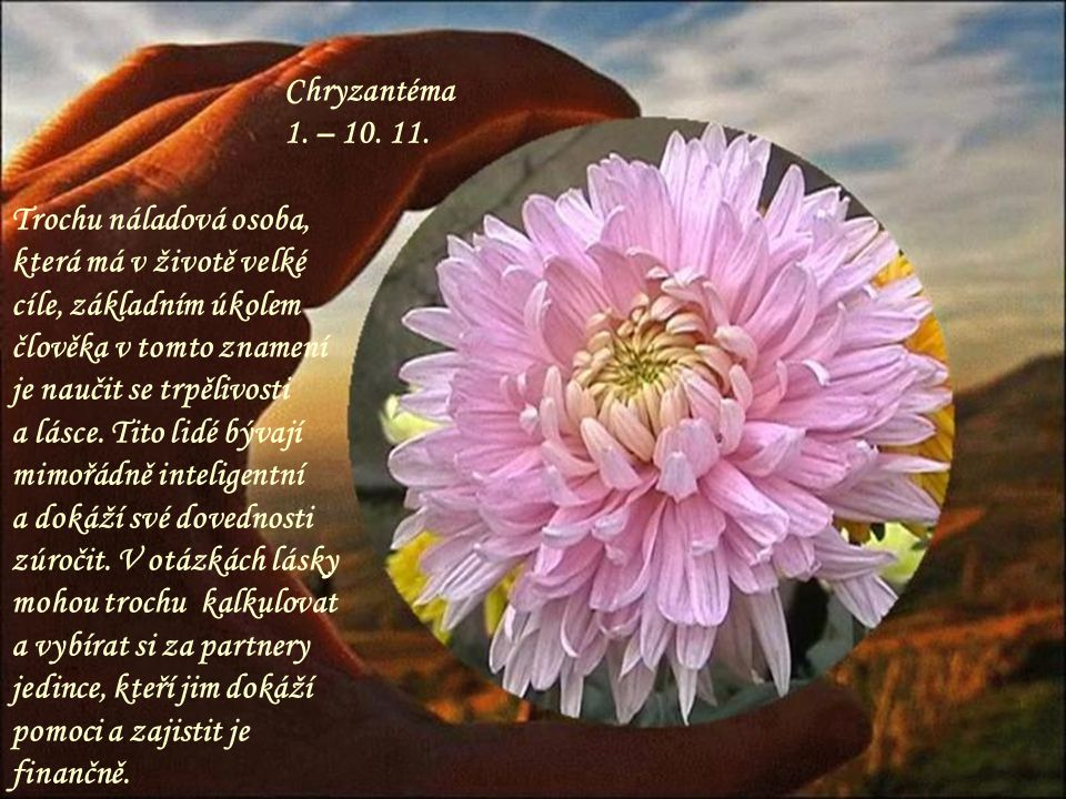 Chryzantéma 1. – 10. 11. Trochu náladová osoba, která má v životě velké cíle, základním úkolem člověka v tomto znamení.