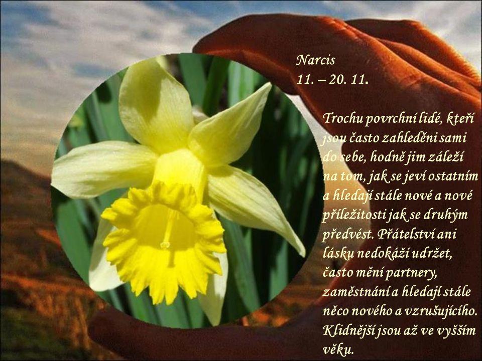 Narcis 11. – 20. 11.