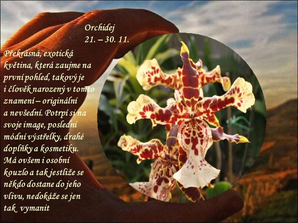 Orchidej 21. – 30. 11. Překrásná, exotická květina, která zaujme na první pohled, takový je. i člověk narozený v tomto znamení – originální.