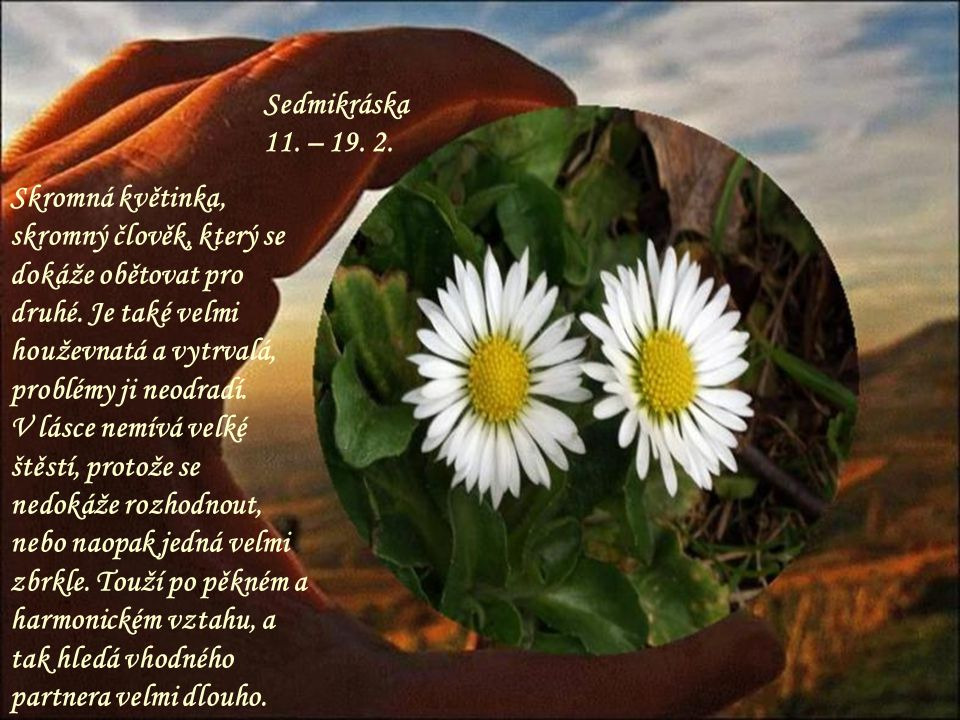 Sedmikráska 11. – 19. 2.