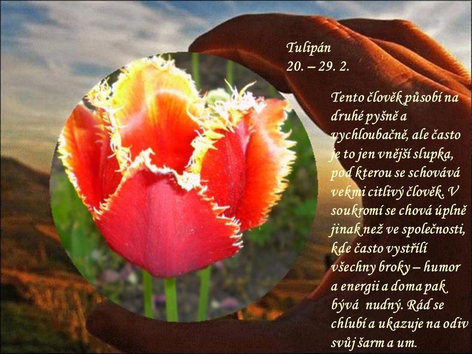 Tulipán 20. – 29. 2.