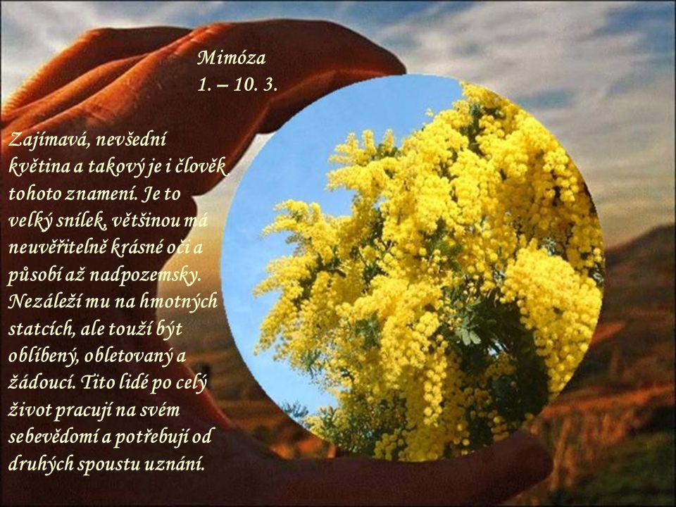 Mimóza 1. – 10. 3.