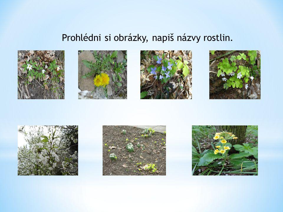 Prohlédni si obrázky, napiš názvy rostlin.