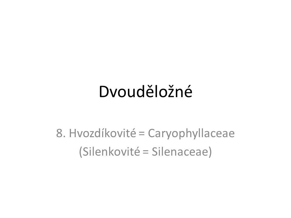 8. Hvozdíkovité = Caryophyllaceae (Silenkovité = Silenaceae)