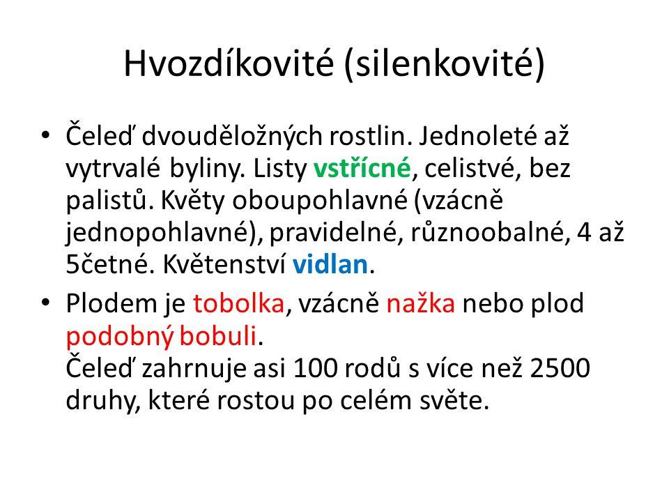 Hvozdíkovité (silenkovité)