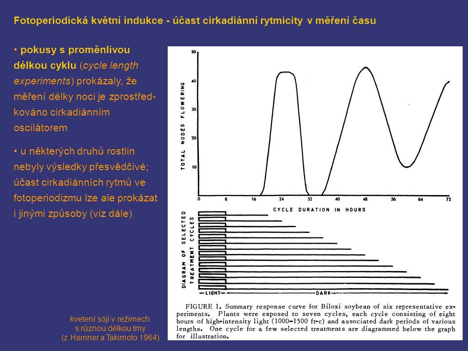 kvetení sóji v režimech s různou délkou tmy (z Hamner a Takimoto 1964)