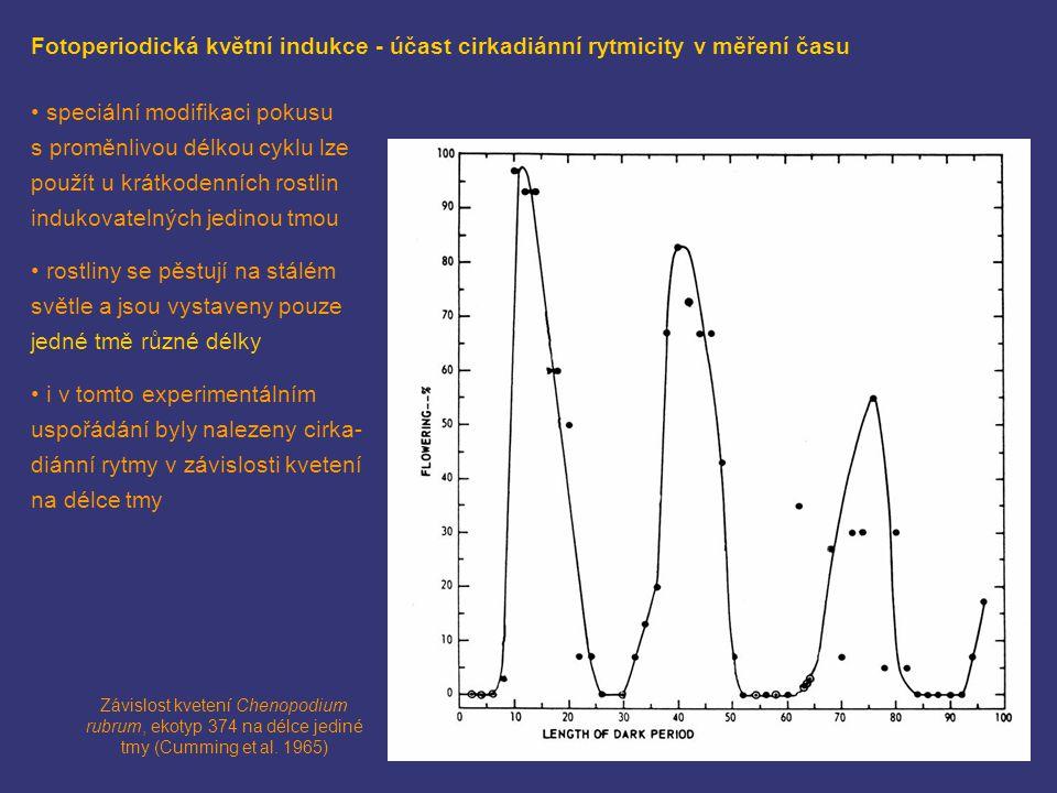Fotoperiodická květní indukce - účast cirkadiánní rytmicity v měření času