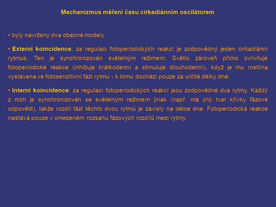 Mechanizmus měření času cirkadiánním oscilátorem