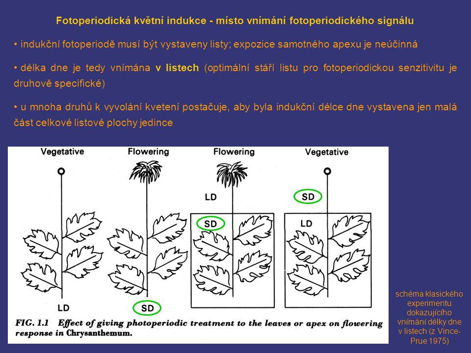 Fotoperiodická květní indukce - místo vnímání fotoperiodického signálu