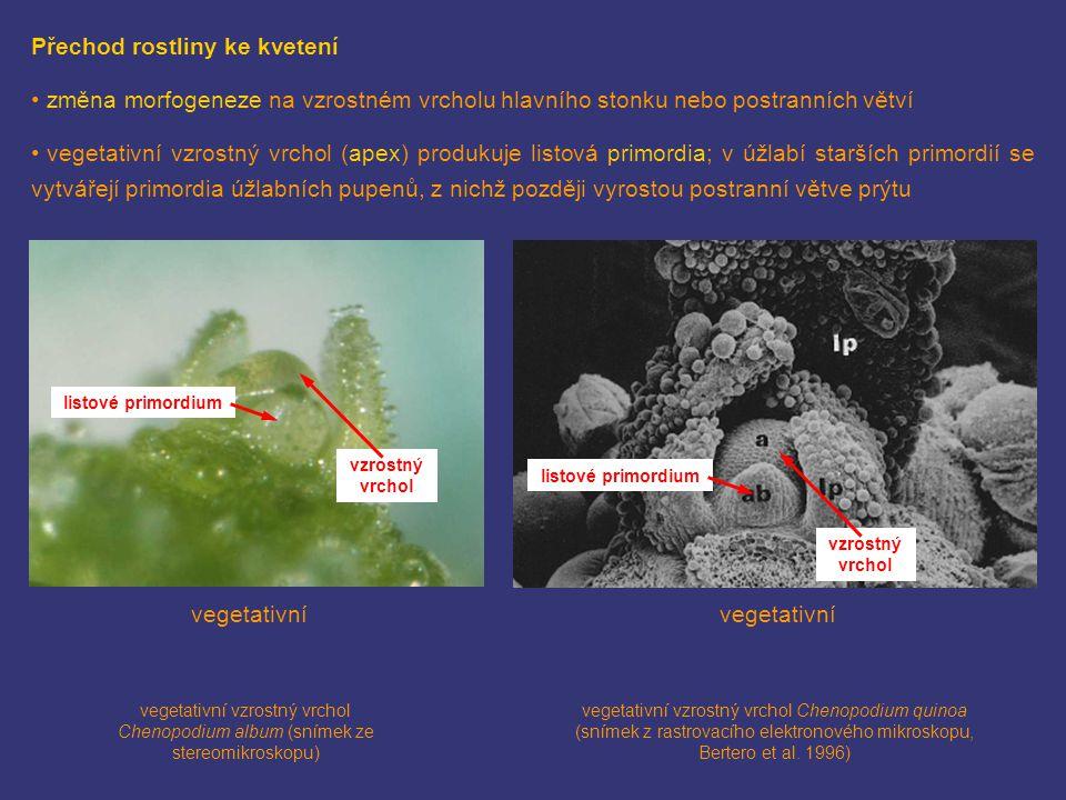 Přechod rostliny ke kvetení