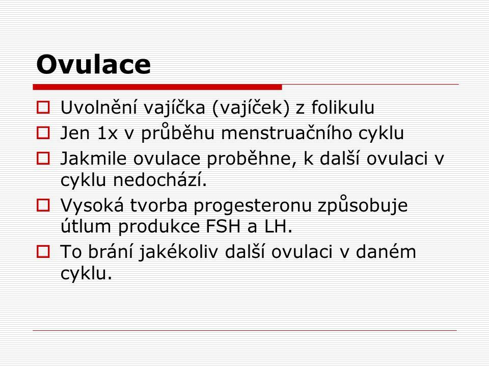 Ovulace Uvolnění vajíčka (vajíček) z folikulu