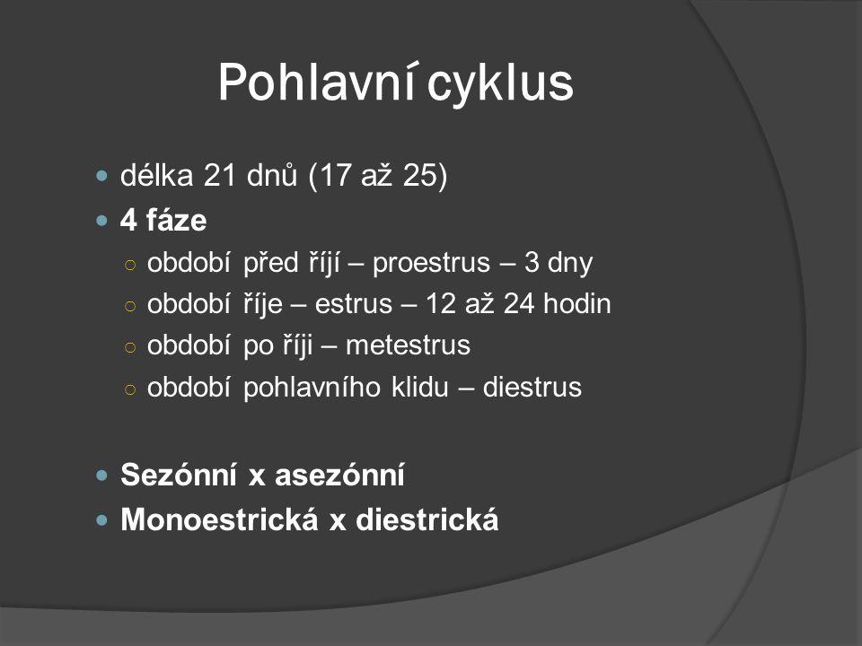 Pohlavní cyklus délka 21 dnů (17 až 25) 4 fáze Sezónní x asezónní