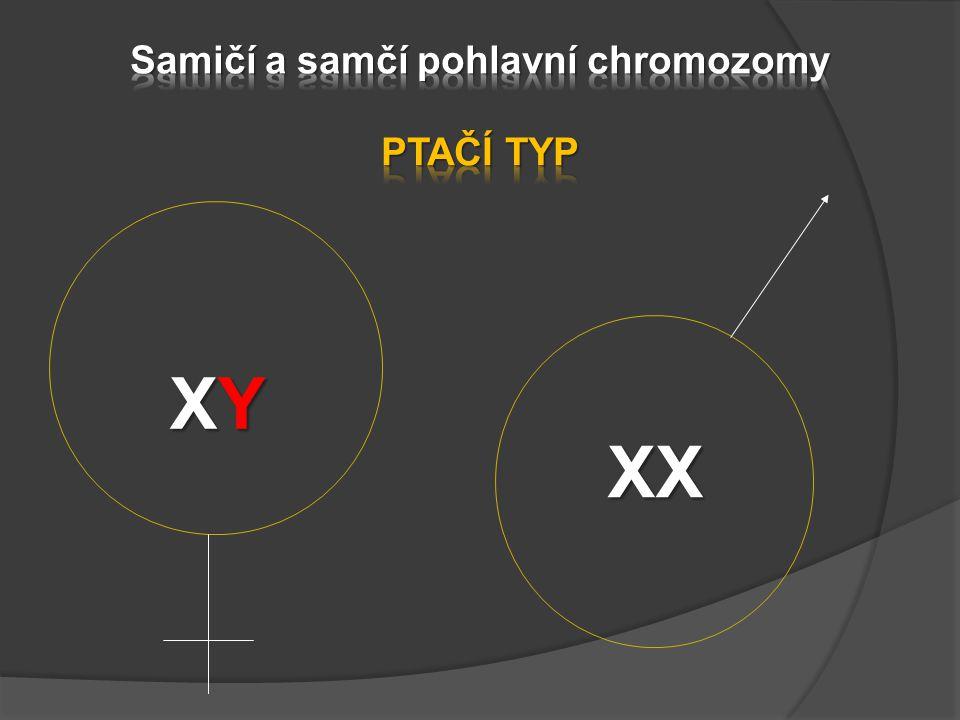 Samičí a samčí pohlavní chromozomy PTAČÍ TYP