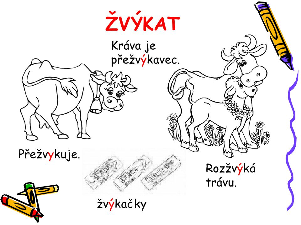 ŽVÝKAT Kráva je přežvýkavec. Přežvykuje. Rozžvýká trávu. žvýkačky