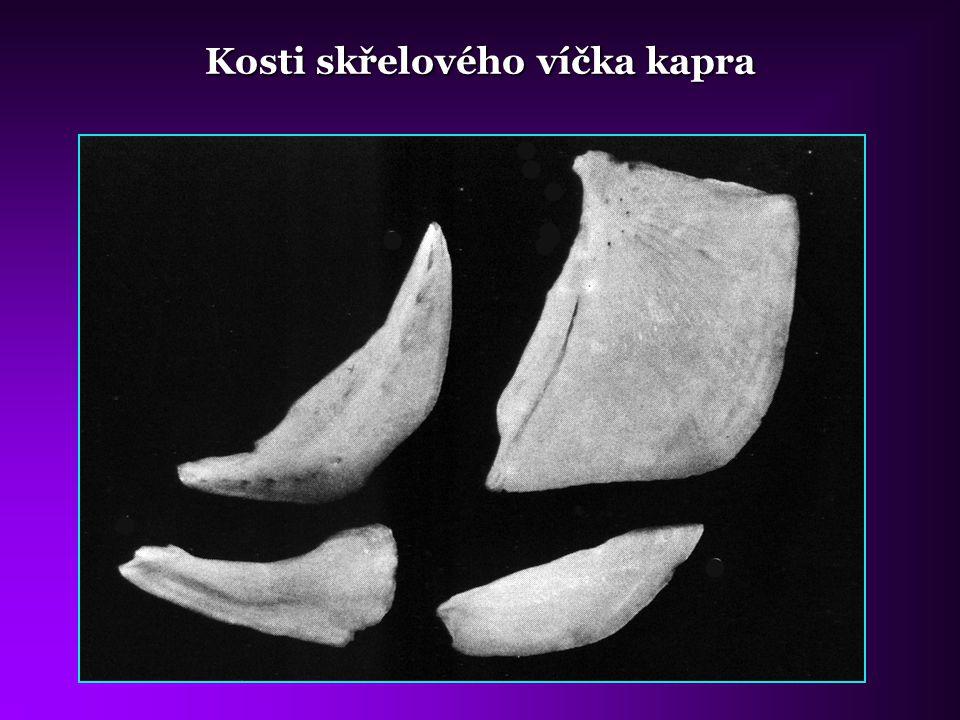 Kosti skřelového víčka kapra