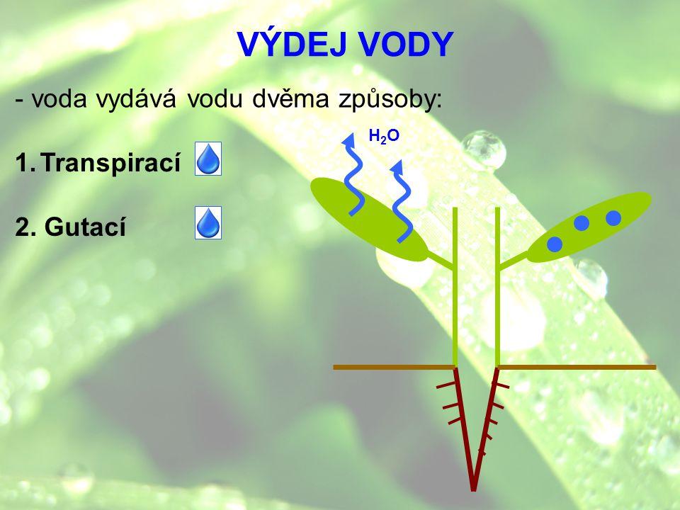 VÝDEJ VODY - voda vydává vodu dvěma způsoby: H2O Transpirací 2. Gutací