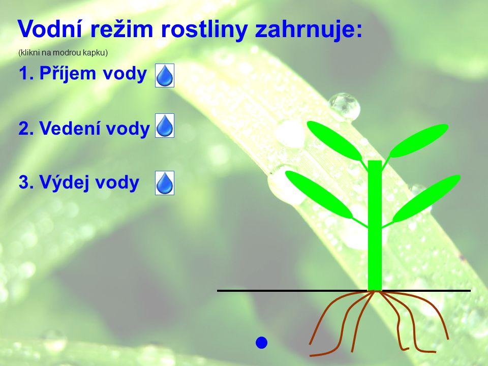 Vodní režim rostliny zahrnuje: