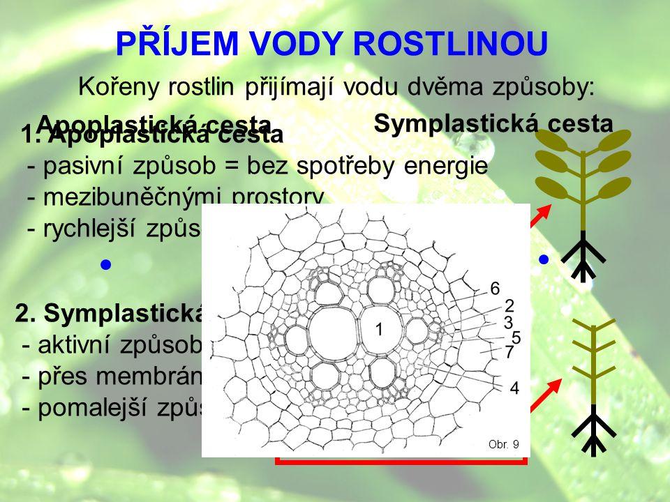 PŘÍJEM VODY ROSTLINOU Kořeny rostlin přijímají vodu dvěma způsoby: