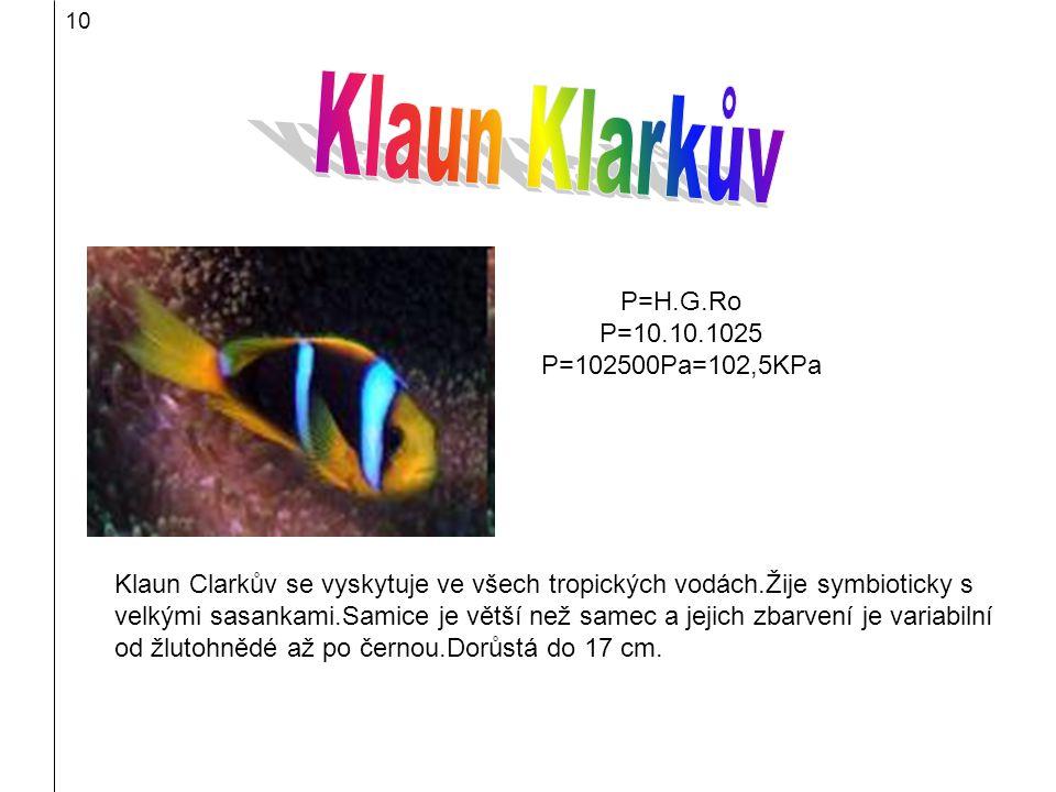 Klaun Klarkův P=H.G.Ro P=10.10.1025 P=102500Pa=102,5KPa