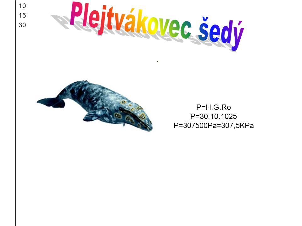 10 15 30 Plejtvákovec šedý P=H.G.Ro P=30.10.1025 P=307500Pa=307,5KPa