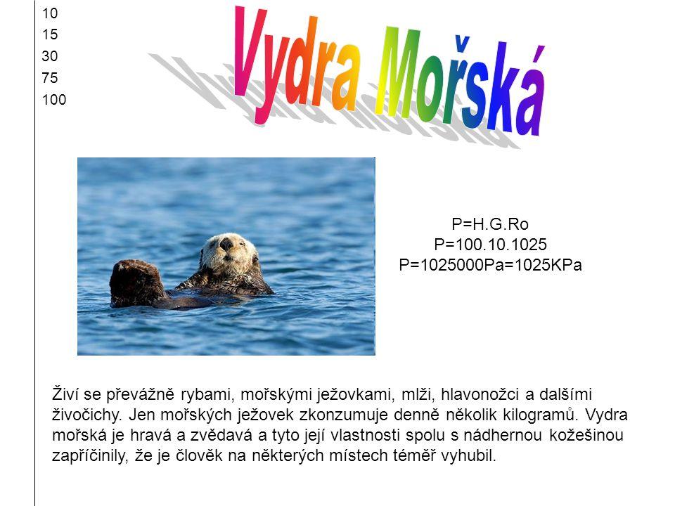 Vydra Mořská P=H.G.Ro P=100.10.1025 P=1025000Pa=1025KPa