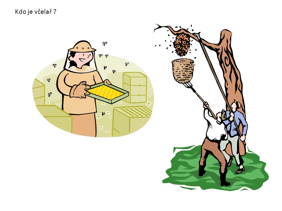Kdo je včelař