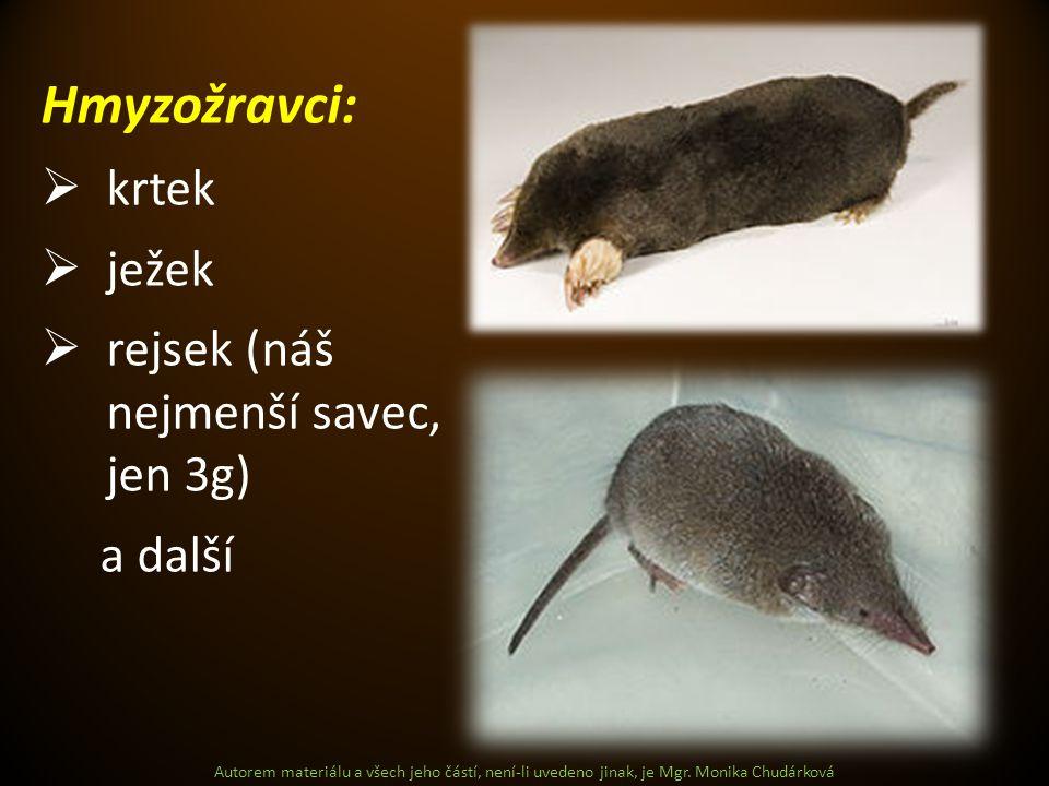 Hmyzožravci: krtek ježek rejsek (náš nejmenší savec, jen 3g) a další