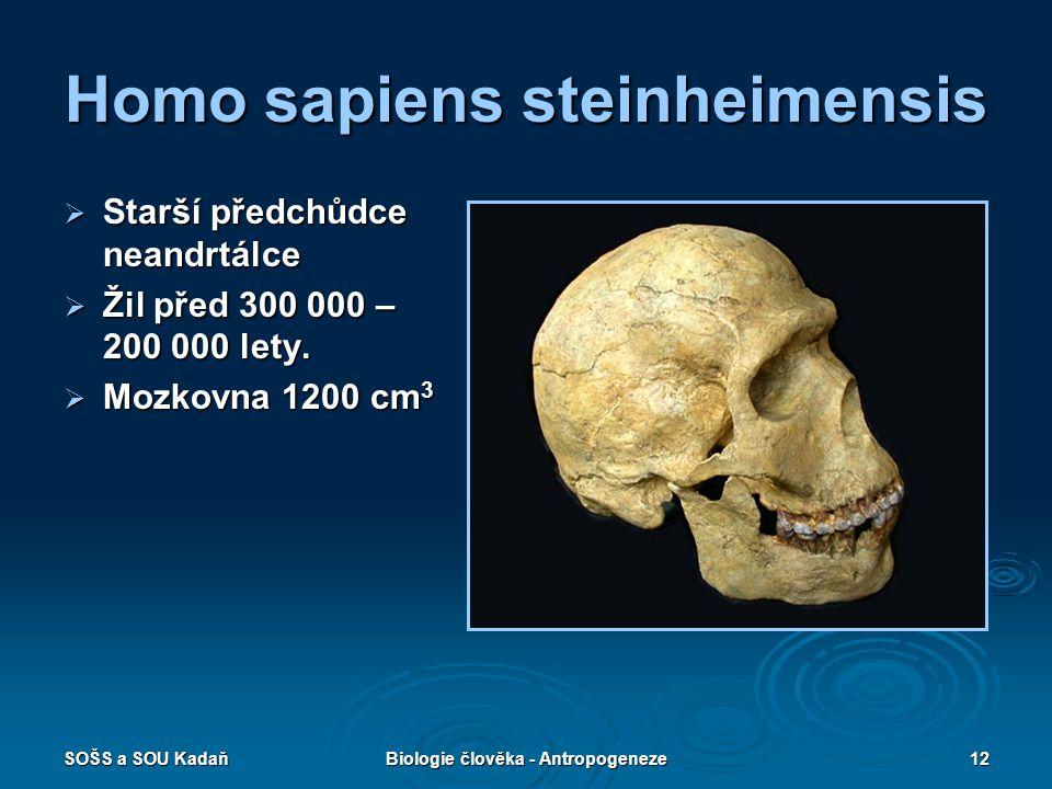 Homo sapiens steinheimensis