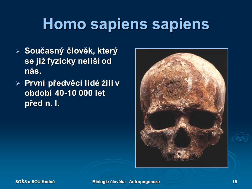 Biologie člověka - Antropogeneze