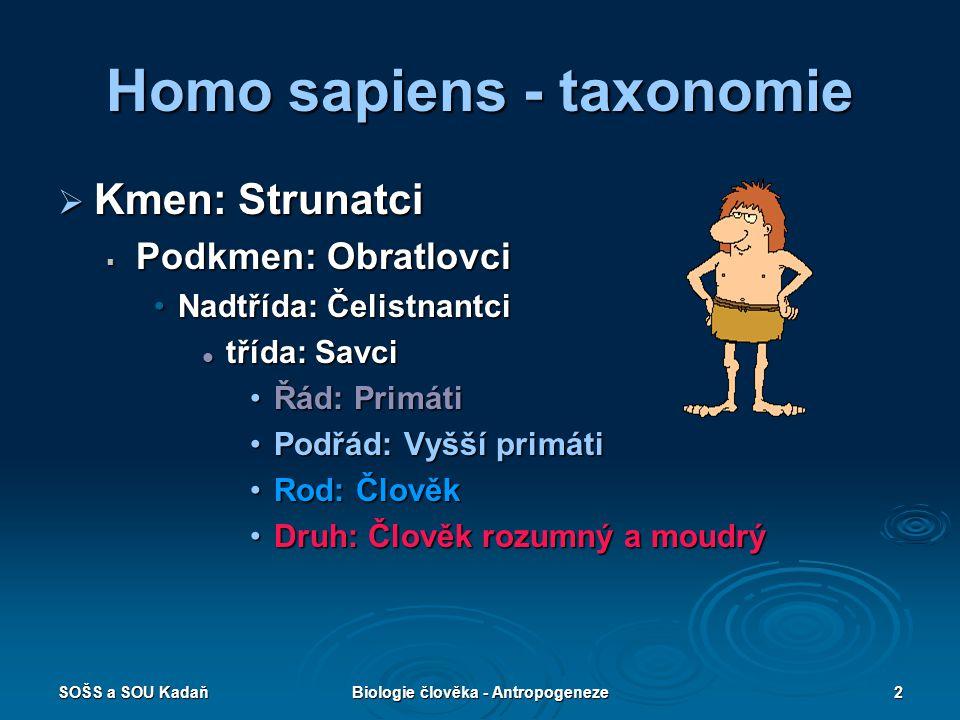 Homo sapiens - taxonomie